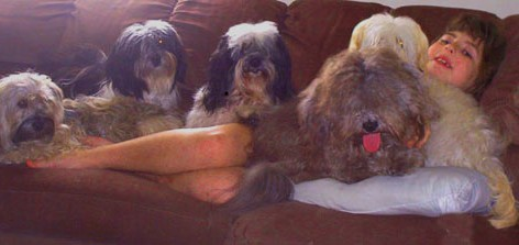 Gabrielle on the couch with five Havanese
