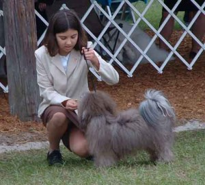 Alex at the AKC dog show with AKC Champion Havanese named Justis